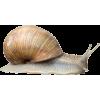 snail - Animals -