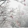 snow background - Background -