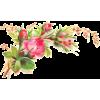 spring - 植物 -
