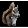 squirrel - Przedmioty -