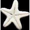 star - 動物 -