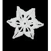Star White - イラスト -