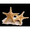 starfish - Priroda -