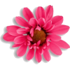 stemless pink flower - Plants -