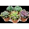 succulent - Uncategorized -