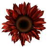 sunflower - Items -