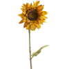 sunflower - Plants -