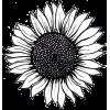 sunflower doodle - Rastline -