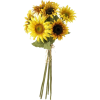 sunflowers - Plantas -