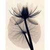 cvijet - My photos -