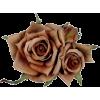 ruže - Piante -