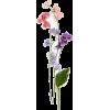 sweet pea flower stems - Plants -