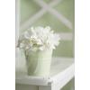 Flower - My photos -