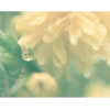 Flower - Mis fotografías -