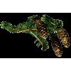 Bor Pine - Plants -