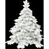 Bor Pine - 植物 -