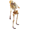 Skeleton - イラスト -