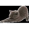 Maca Cat - Animals -