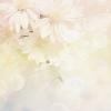 Flower - Minhas fotos -