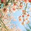 Spring - Mis fotografías -