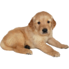 psić - Animals -