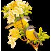 Bird - Živali -