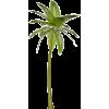 Palm tree - Plantas -