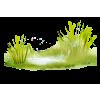 Grass - Plantas -