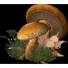 mushroom - Pflanzen -