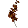Leafs - Растения -