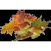 Leaf - Plants -