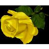 Yellow Rose - Piante -