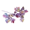 Leafs - Plants -