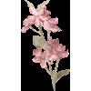 Plants Pink - Biljke -