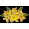Plants Yellow - 植物 -