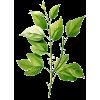 Plants Green - Piante -