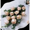 Biljke Beige Plants - Piante -