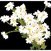 Biljke White Plants - Pflanzen -