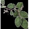 biljke - Pflanzen -