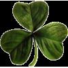 djetelina clover - Plants -