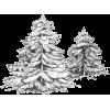 snow tree - Rośliny -