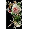 ruža rose - Piante -