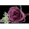 Rose - Plants -