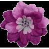 cvijeće - Plants -
