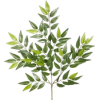 branch - Pflanzen -