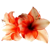 cvijeće - Piante -
