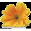 cvijeće - Plantas -