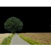 Road - Buildings -