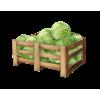Cabbage - イラスト -