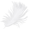 Feather - Illustrations -